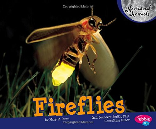Fireflies (Nocturnal Animals)