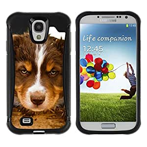 LASTONE PHONE CASE / Suave Silicona Caso Carcasa de Caucho Funda para Samsung Galaxy S4 I9500 / Siberian Husky Alaskan Malamute Puppy
