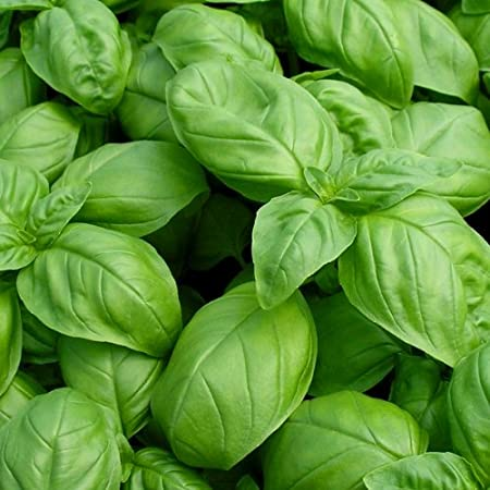 4 Easy Facts About 8 Things To Know About Basil Seeds - F-factor Explained