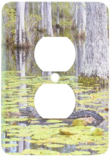 lsp_94248_6 South Carolina, Cypress Gardens Alligator, Sw...