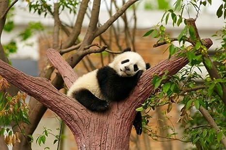 """Cute White Panda Poster 24/""""x 36/"""" HD"""
