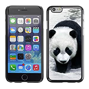 SHIMIN CAO- Dise?o Caso duro de la cubierta Shell protector FOR Apple iPhone 6 6S 4.7- Panda Cute Face