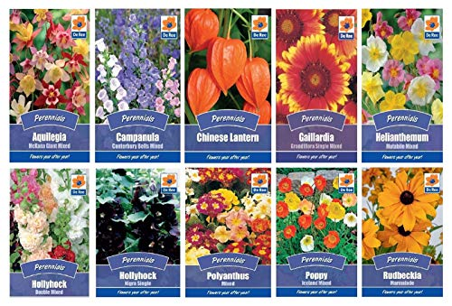 Polyanthus 1 Pack : Seeds Collection Assorted perennials with Variable Quantity