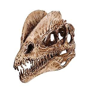 Dinosaur Dilophosaurus Skull Resin Fossil Model Collectibles Home Bar Decoration 2 Color Pick - White , 18cm