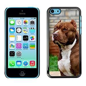 FlareStar Colour Printing Pit-Bull American Dog Boston Terrier Canine cáscara Funda Case Caso de plástico para Apple iPhone 5C