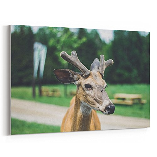 Bongo Girls Jeans - Westlake Art - Antler Park - 16x24 Canvas Print Wall Art - Canvas Stretched Gallery Wrap Modern Picture Photography Artwork - Ready to Hang 16x24 Inch