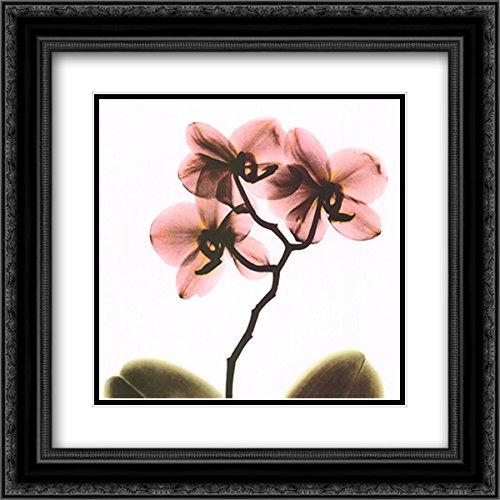 Crystal Flowers X-Ray, Orchid 2X Matted 16x16 Black Ornate Framed Art Print by Albert Koetsier