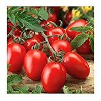 "Start tomatoes indoors 6-8 weeks before the last frost of spring, sowing the seeds in a flat 1/4"" deep and 1"" apart. Keep the temperature at 70-75 degrees F until germination, as well as providing adequate light in a sunny window or under a grow ligh..."