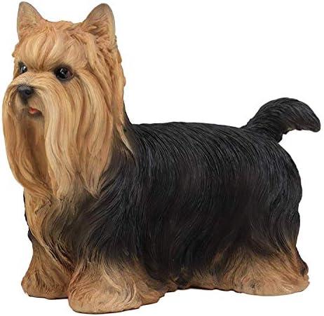 Julius-K9 Museli/ère en Cuir pour Chien Yorkshire Terrier//Pinscher Nain pour Chien Yorkshire Terrier//Pinscher Nain