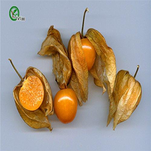 Chinesische Laterne Süßes Pilz Samen Bio-Obstbaum-Samen Hausgarten Obstpflanze, ist essbar! 40 Stück Y019