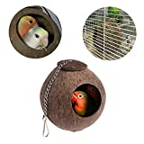 Parrot nest ,NNDA CO 1 Pc Natural Coconut - Best Reviews Guide