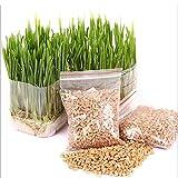Qianren Cat Grass Seeds 2ps Mini Organic Pet Grass Kit 30g -Grow Wheatgrass for Pets Review