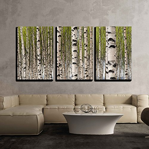 wall26 - 3 Piece Canvas Wall Art - Grove of Birch Trees with Green Leaves in Spring - Modern Home Decor Stretched and Framed Ready to Hang - 16