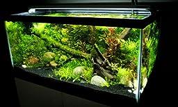 Finnex FugeRay Aquarium LED Light Plus Moonlights, 10-Inch