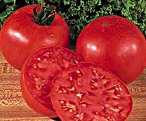 New Rare Burpee's Big Boy Tomato Hybrid 100+ Seeds/Pack