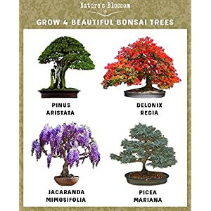 Natures-Blossom-Bonsai-Garden-Seed-Starter-Kit-Easily-Grow-4-Types-of-Miniature-Trees-Indoors-A-Complete-Gardening-Set-Organic-Seeds-Soil-Planting-Pots-Plant-Labels-Growing-Guide-Unique-Gift