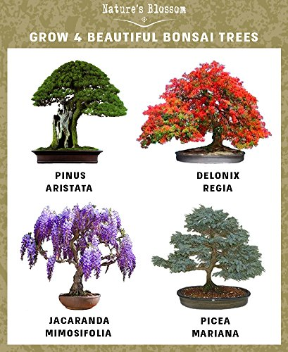 Nature S Blossom Bonsai Tree Kit
