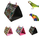 Colors of Rainbow Rainbow25 Bird Triangle Canvas