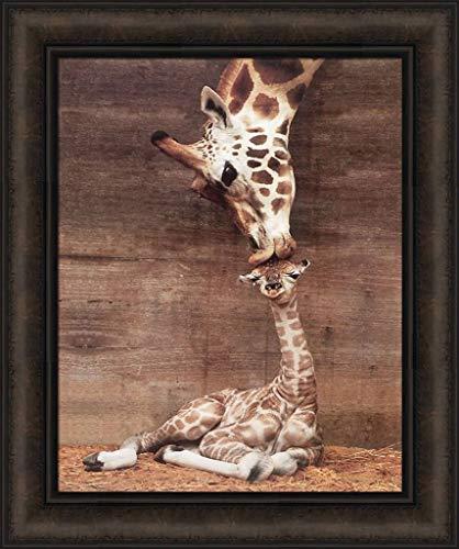 (Makulu by Ron D'Raine 18x21.5 Rothschild Giraffe Mother Love First Kiss Baby Nursery Animal Framed Art Wall Décor Picture)