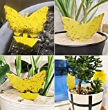 Stingmon 12 Pack Sticky Fruit Fly Fungus Gnat Traps Killer for Indoor and Outdoor Protect The Plant, Non-Toxic and Odorless, A1, Beige