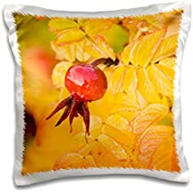 Danita Delimont - Flora - Washington, Fall-colored Rose Hips flora - US48 SWS0078 - Stuart Westmorland - 16x16 inch Pillow Case (pc_96842_1)