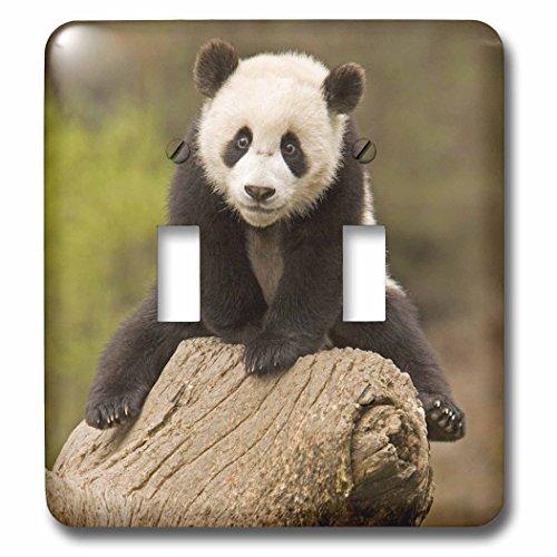 Wolong Panda Reserve China - 3dRose lsp_70238_2