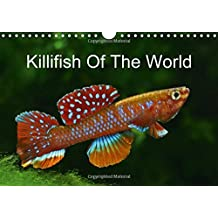 Killifish Of The World 2016: Colourful fish - Killifish from Africa and South America