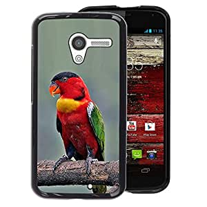 A-type Arte & diseño plástico duro Fundas Cover Cubre Hard Case Cover para Motorola Moto X 1 1st GEN I (Parrot Bird Branch Red Beak Wings)