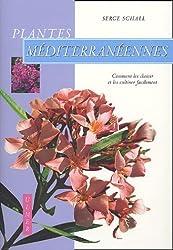 Plantes méditerranéennes : Comment les choisir et les cultiver facilement