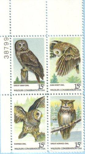 amazon com american owls great grey owl saw whet owl barred