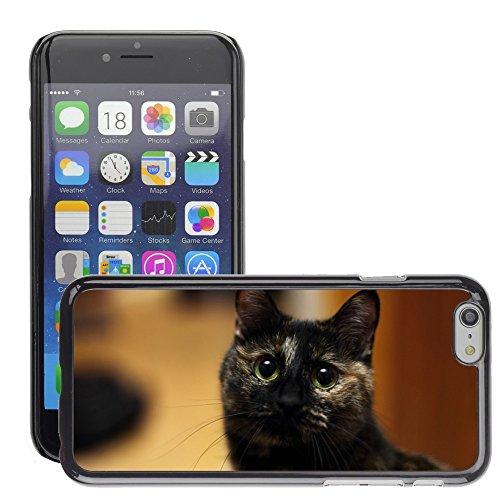 "Bild Hart Handy Schwarz Schutz Case Cover Schale Etui // M00134579 Cat Bobtail // Apple iPhone 6 PLUS 5.5"""