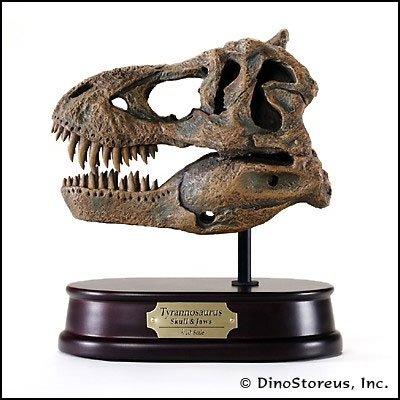 Tyrannosaurus Rex Skull Model 1/10 Scale