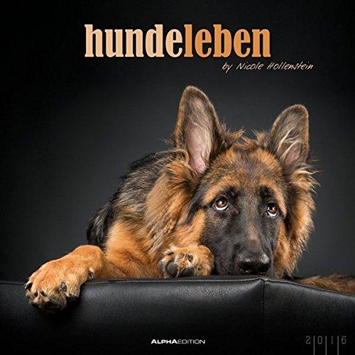 Hundeleben 2016 - Hunde - Bildkalender (33 x 33) - Tierkalender - mit Zitaten und Foliendeckblatt - by Nicole Hollenstein