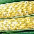 Jays Seeds 0602 Honey N' Pearl Sweet Corn, 75 Seeds