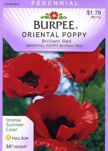 Burpee Oriental Poppy Brilliant Red