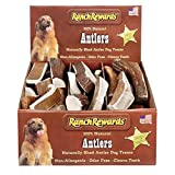 Ranch Rewards Moose Antler Display 28 Pc