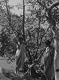 1915 dance nude Isadora Duncan dancers Black & White Vintage Photo D536
