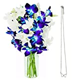 KaBloom Starry Night Orchids & Infinity Hearts Necklace: 5 Blue Dendrobium Orchids, 5 White Dendrobium Orchids with Vase and an Infinity Hearts Necklace