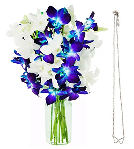 KaBloom Starry Night Orchids & Infinity Hearts Necklace: 5 Blue Dendrobium Orchids, 5 White Dendrobium Orchids with Vase and an Infinity Hearts Necklace by KaBloom