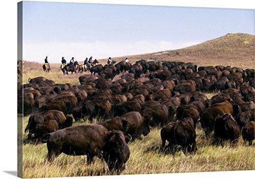 Guido Cozzi Premium Thick-Wrap Canvas Wall Art Print entitled South Dakota, Black Hills, Custer State Park, Buffalo ()