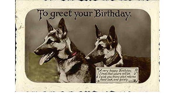 Amazon Two German Shepherd With Birthday Greetings Dogs Original Vintage Postcard Entertainment Collectibles