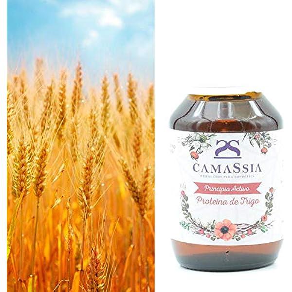 Proteína de trigo (Queratina vegetal): Amazon.es: Belleza
