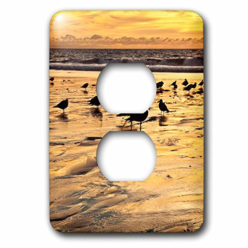 3dRose Danita Delimont - Encinitas - California, Encinitas. Sea gulls on Moonlight Beach at sunset - Light Switch Covers - 2 plug outlet cover - Outlet Encinitas
