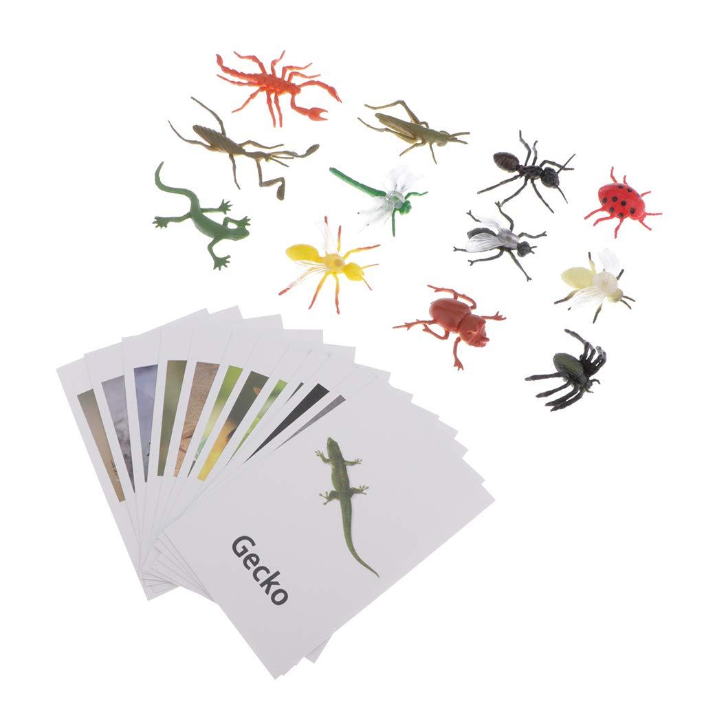 MagiDeal Jouet dEveil Mini Insectes Artificiels avec Cartes Imprime Animaux Jouet Educatif de Montessori denfants Cadeau No/ël Fille Gar/çon
