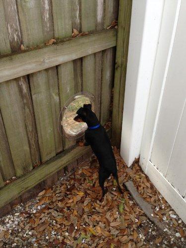 PetPeek Fence Window for Pets