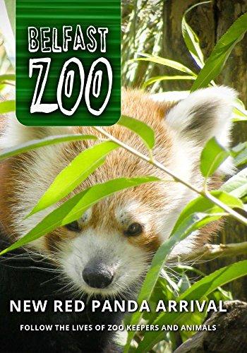 Belfast Zoo: New Red Panda Arrival