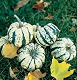 David's Garden Seeds Squash Winter Sweet Dumpling DW6811 (Multi) 50 Non-GMO, Open Pollinated Seeds