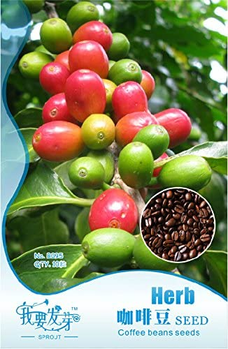 1 paquete original, 10 semillas / pack, semillas de café en grano, de la planta del café arábica (Coffea arabica) Catura semillas # NF247: Amazon.es: Jardín