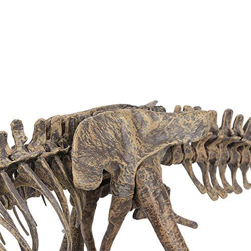 Trex fossil model