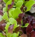 David's Garden Seeds Lettuce Encore Mix DF2366TY (Multi Color) 500 Orgainc Seeds